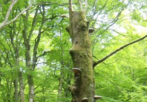 das geheime leben der bäume, peter wohlleben, sachbuch