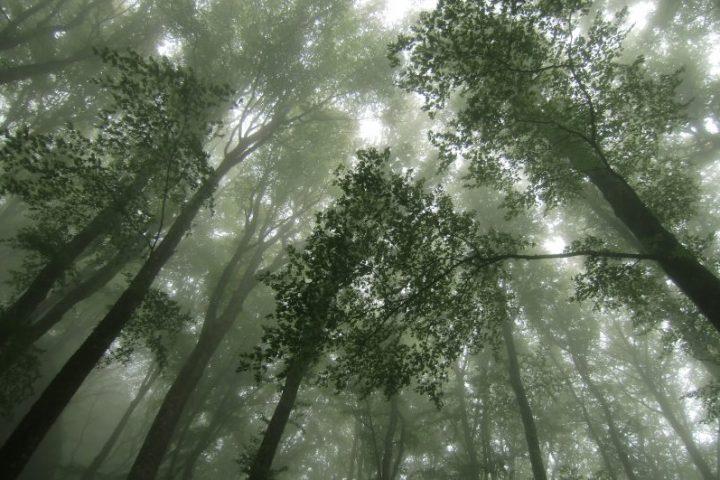 Im Wood-Wide-Web: Das geheime Leben der Bäume