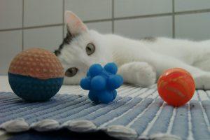 Wecke den Tiger in mir! 10 tolle Katzenspiele im Ranking