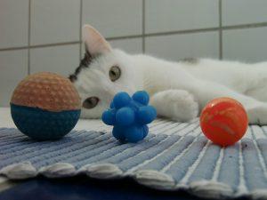 katzenspiel, gummibaelle, katze, ball, flummi