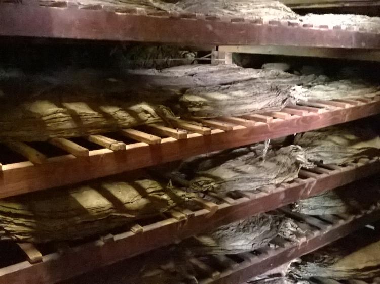 Hier werden die Tabakblätter getrocknet ...