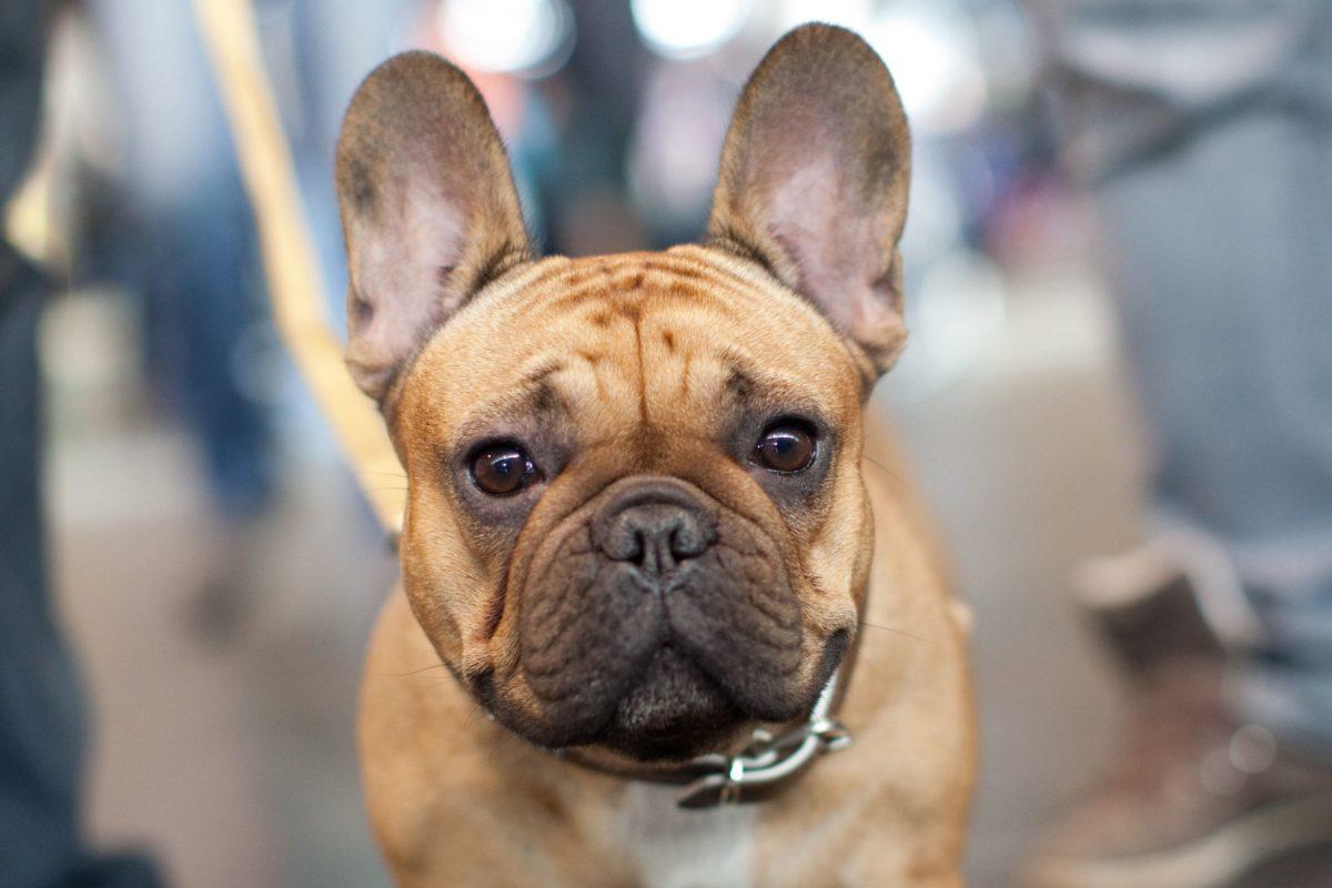 Miau, Wuff, Piep – die Leckerlis der Haustiermesse in Wien