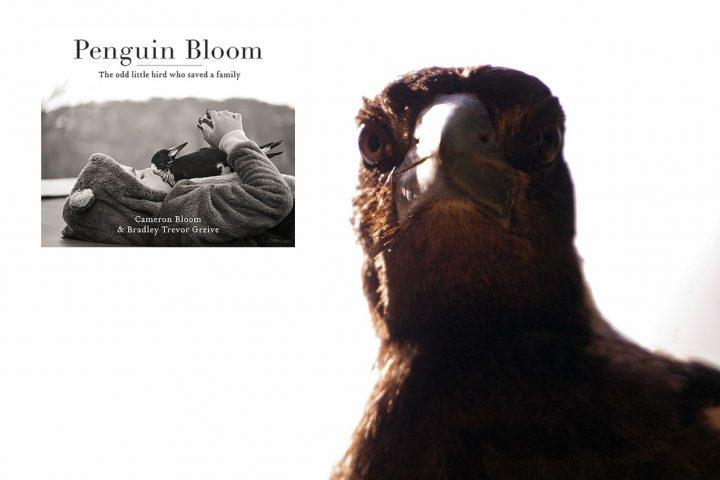 Penguin Bloom – wie eine freche Elster dein Leben verändert