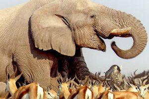 Fantastisch! 3sat zeigt Natur-Doku Afrika – Der ungezähmte Kontinent