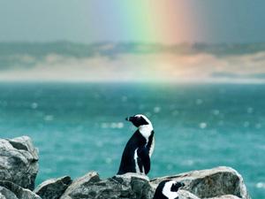 natur-doku afrika, serie, doku, dokumentation, afrika, pinguine, bbc, orf, dokuserie, kap der guten hoffnung, der ungezähmte kontinent, 3sat