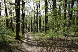 laufstrecken in wien, laufstrecken, wien, laufen, natur, laufen in der natur, im grünen, neuwaldegg, michaelerwald, wien