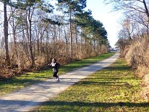 laufstrecken in wien, laufstrecken, wien, laufen, natur, laufen in der natur, im gruenen, laaer wald, favoriten, boehmischer prater