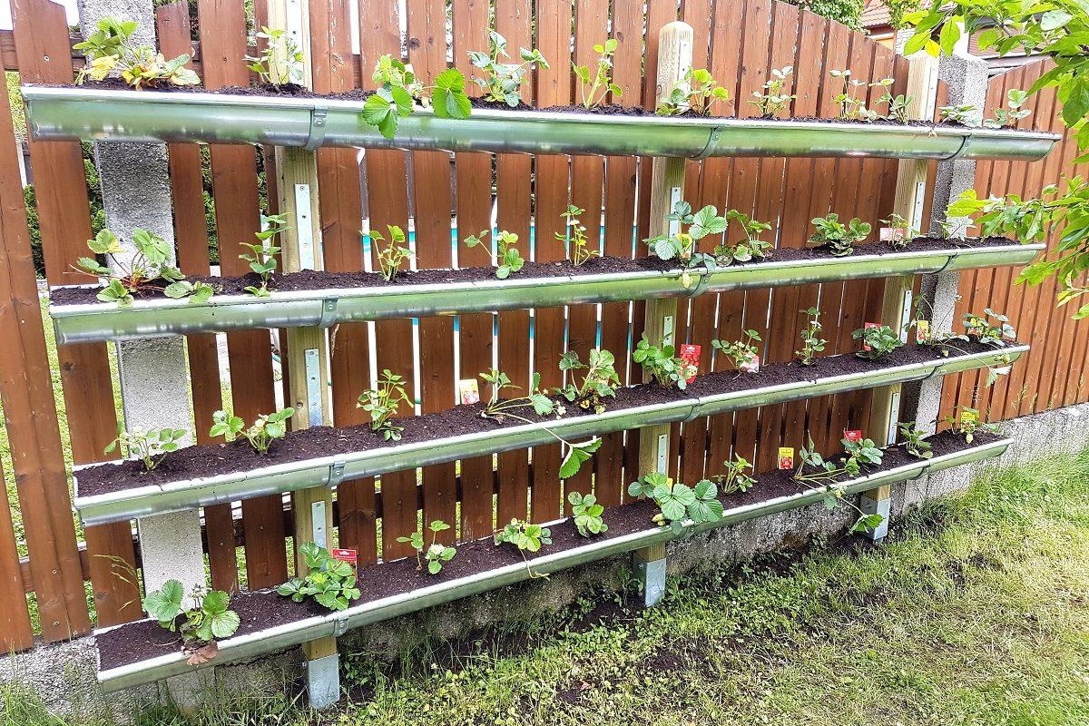 Vertical Garden bauen – so pflanzt du Erdbeeren in der Dachrinne!