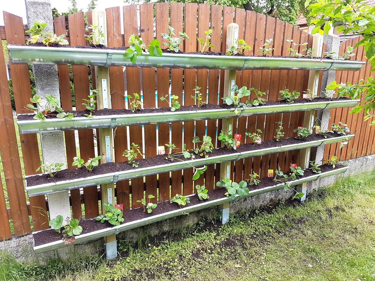vertical garden bauen so pflanzt du erdbeeren in der. Black Bedroom Furniture Sets. Home Design Ideas