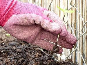 kraeutergarten, gartenanfaenger, kraeuter, tipps, standort, auswahl, anlage, zeitpunkt, pflege, pflanzen