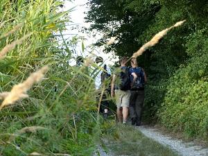 wiesen, wälder, tour, wanderung, nationalpark donau-auen, nationalpark, donau-auen