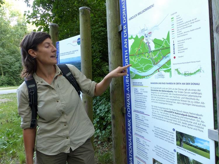 ranger, fledermauswanderung, nationalpark donau-auen, aulandschaft