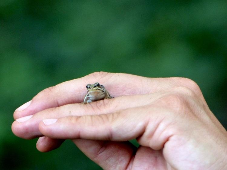 frosch, fledermauswanderung, nationalpark donau-auen