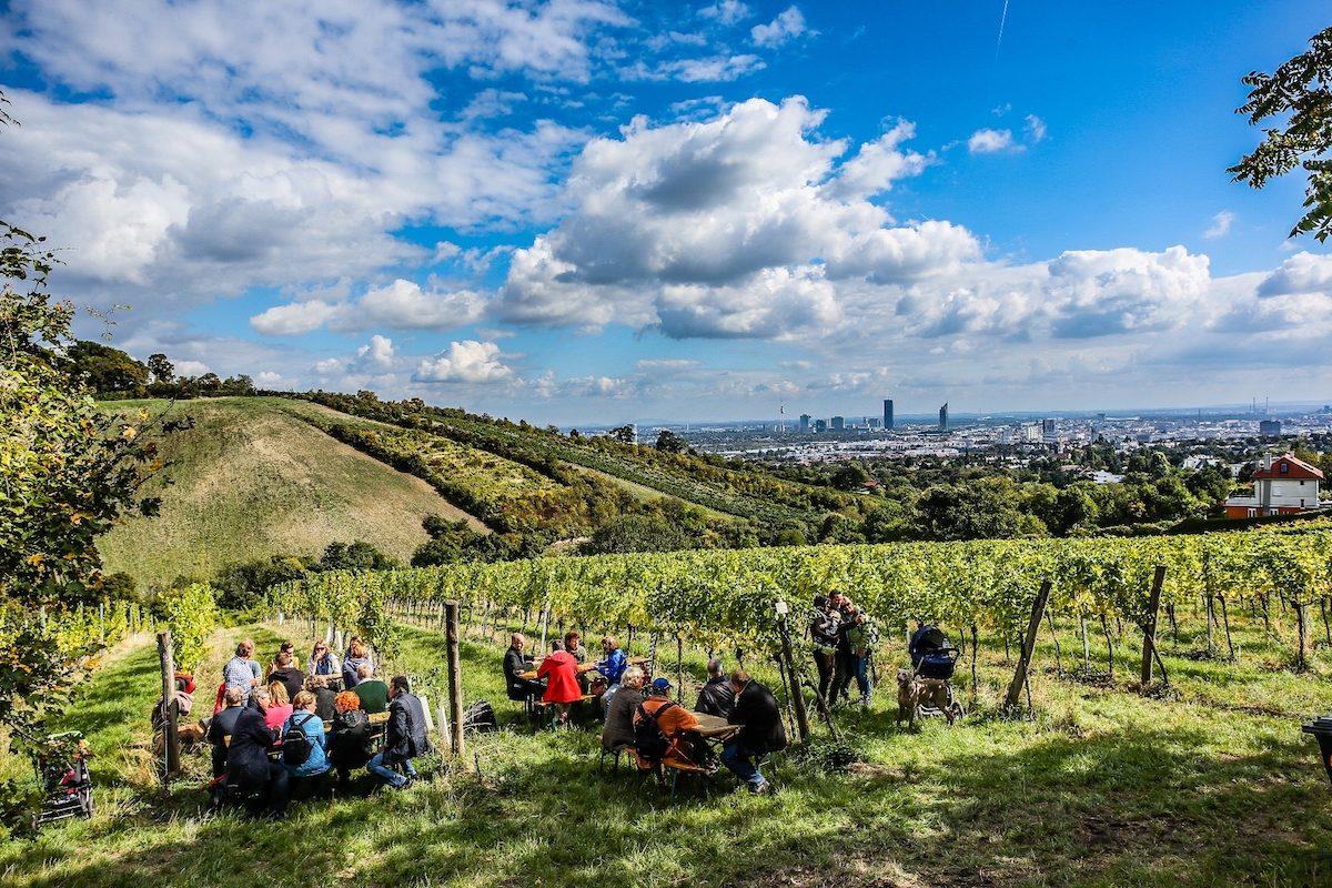 Wiener Weinwandertage: Edle Tropfen in Traumkulisse