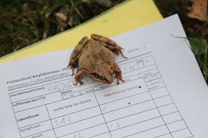 Liste, Zählung, Kröte, Ort, Amphibien-Wanderung