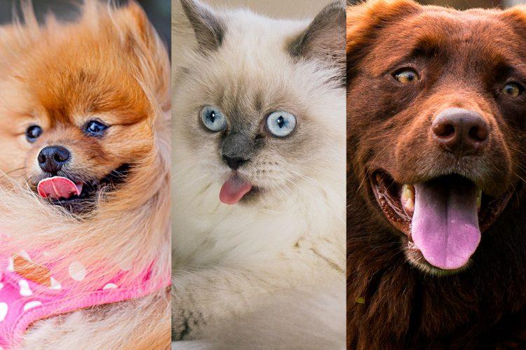 Haustiermesse Wien 2018 – entdecke den Star im Vierbeiner