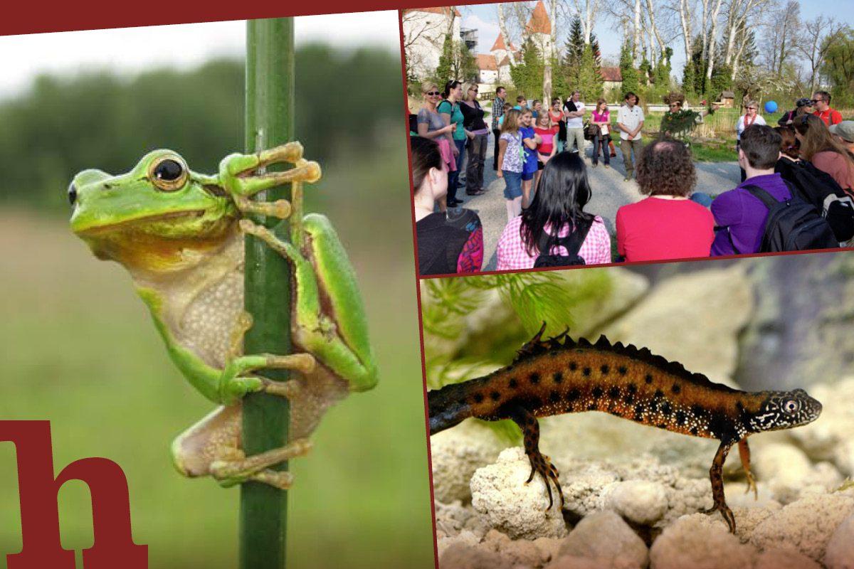 Kleine Drachen, süße Frösche: Das Familienfest im Schloss Orth