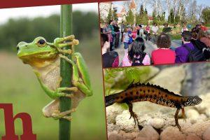 Familienfest, schloss, orth, nationalpark, frosch, donau, kammmolch, kinder