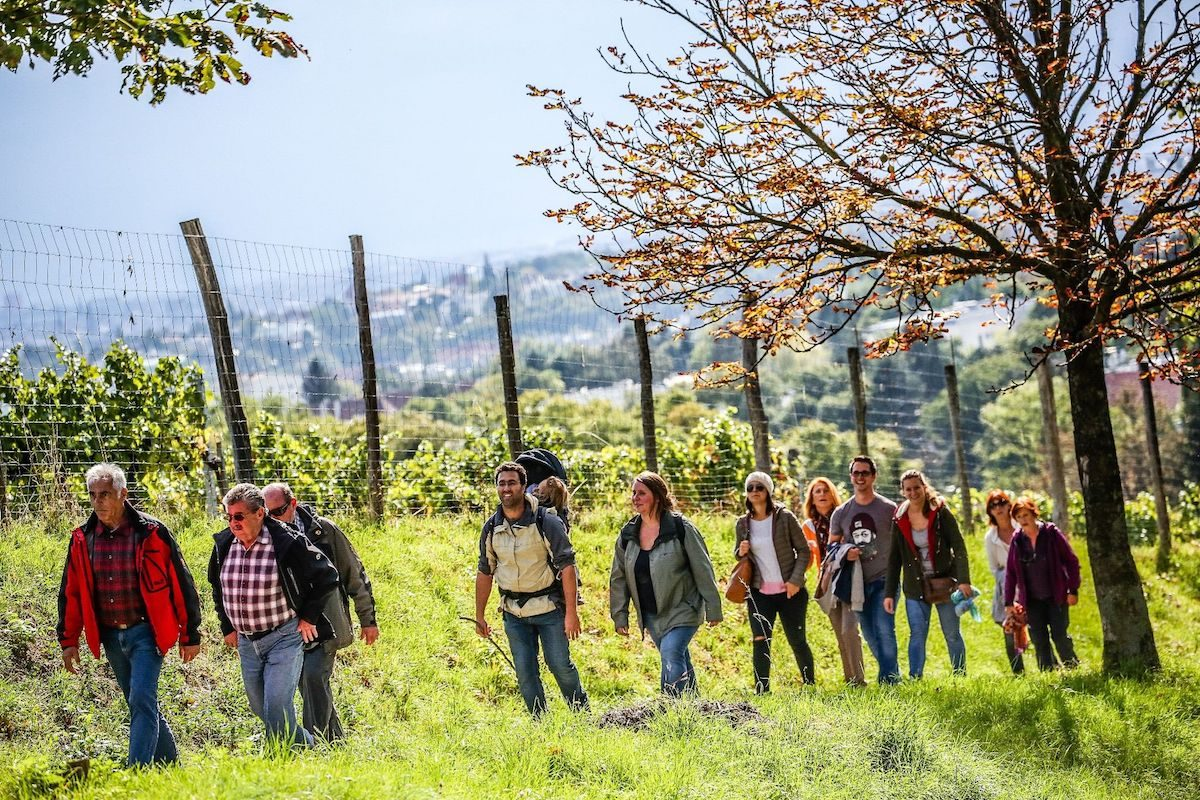 Wiener Weinwandertage 2018: feine Kostproben, fantastische Ausblicke