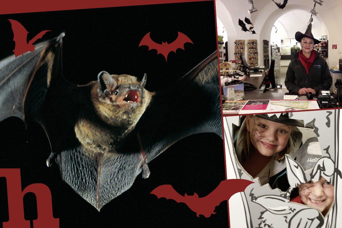 Halloween-Fest im Schloss Orth: Im Reich der Fledermaus