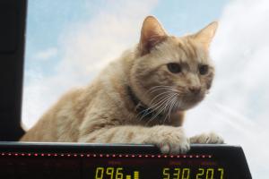 Captain Marvel, Goose, Katze, Kätzchen, Cockpit, Himmel,