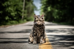 Katze, Straße, Asphalt, Friedhof der Kuscheltiere, schmutzig