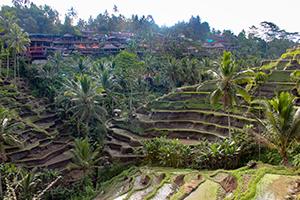 Bali, Reisfeld, Reisterrassen, Sightseeing, Indonesien