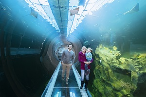 haus des meeres, wien, aquarium, familie, fische, indoor
