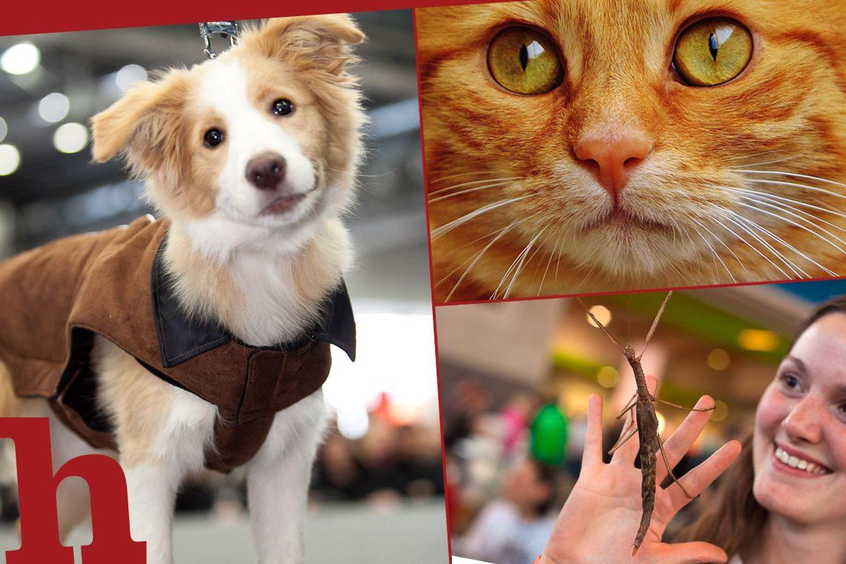 Haustiermesse Wien 2020 – lerne Neues über deinen Vierbeiner!