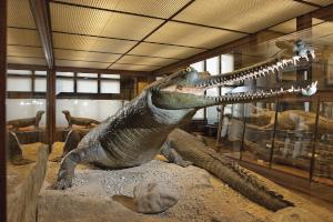 österreich, naturhistorisches museum, google tour, freizeit, kultur,