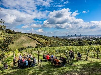 Bisamberg, Weinreben, Blick auf Wien, Heurigen, wien spaziergänge, wandern