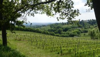 Wein, Aussicht, Kahlenberg, Wien