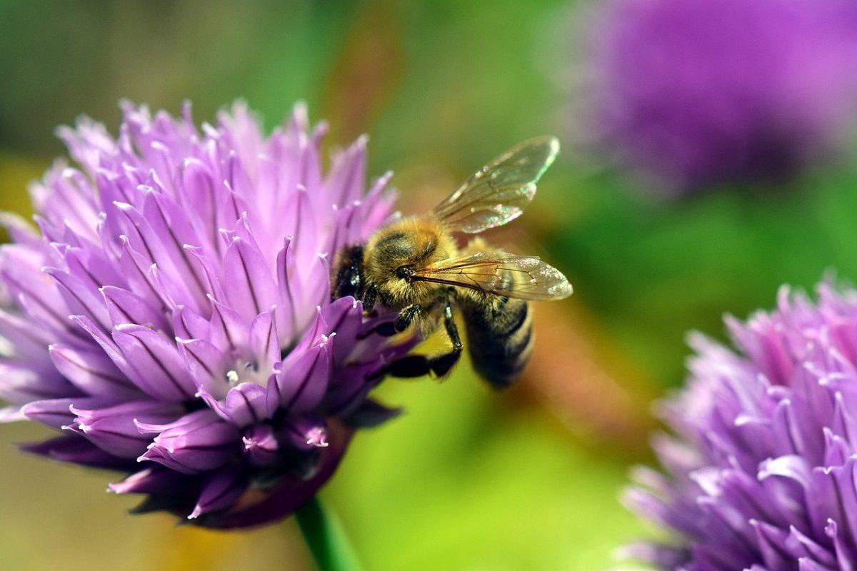 Garten tierfreundlich gestalten – in 10 Schritten zur Naturoase