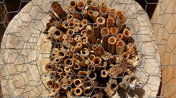 Insektenhotel aus Bambus
