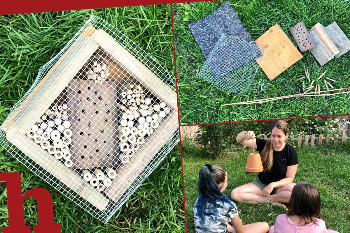 Insektenhotel richtig bauen – Tipps mit Video: Und häufigste Fehler