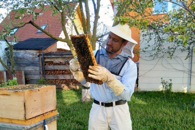 Honig selbst machen – 10 Tipps und Facts vom Imker