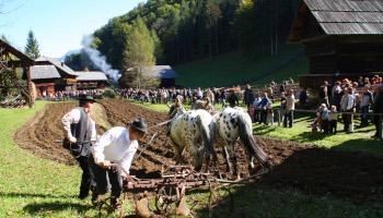 freilichtmuseum stübing, acker, pferde, steiermark,