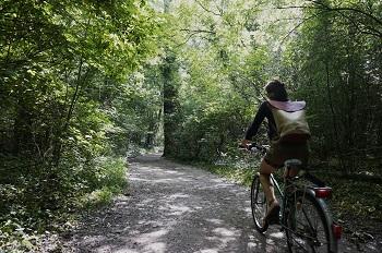 Radweg Lobau, Wald, Donau-Auen