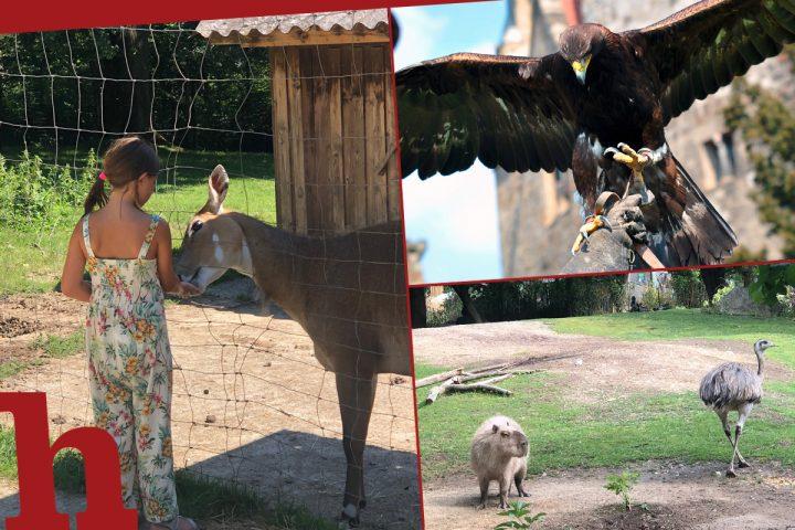 15 Natur- und Tierparks in Wien und NÖ für einen tierisch coolen Ausflug