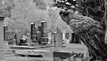zentralfriedhof, wien, adler, friedhof, halloween, ausflug, schwarzweiß,