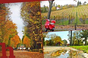Herbst in Wien: 55 geniale Orte & Tipps für einen Herbstausflug