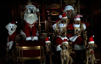 santa pfote, kleine pfote, hunde, weihnachten, santa claus, weihnachtsmann