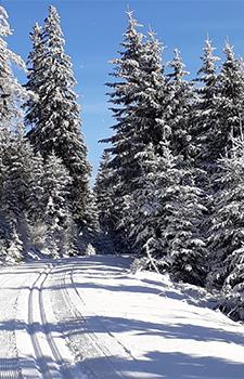 langlaufen, niederoesterreich, wintersport