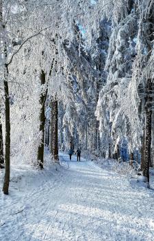 winterwandern, jauerling, wachau