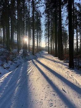 Loipe, Spur, Langlaufen in Bärnkopf, Wald