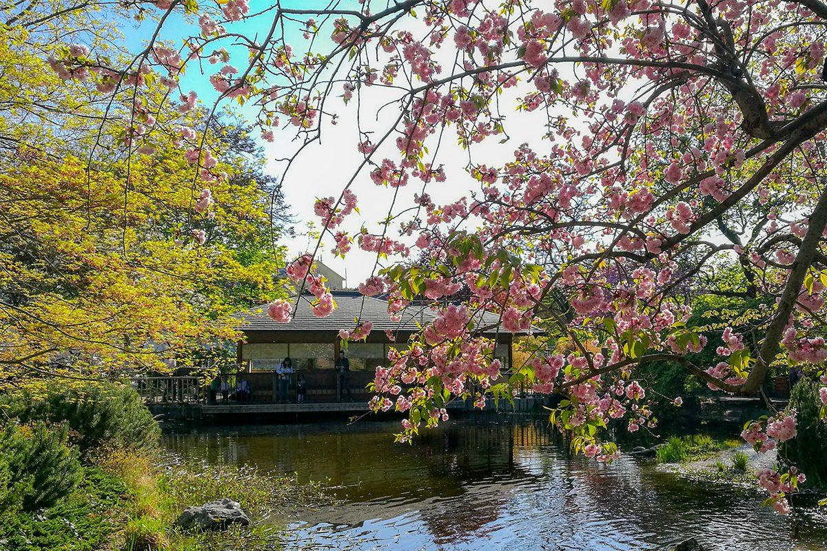 10 schöne Spazierwege durch Wien im Frühling: Hier blüht's!