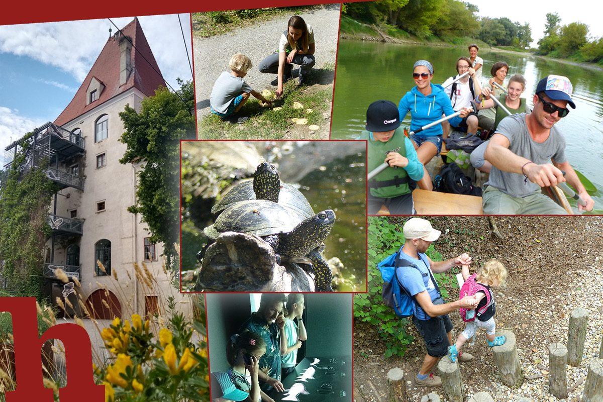 Donau-Auen: 10 Gründe für einen Ausflug in den Nationalpark