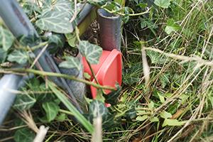 Geocache Versteck, Tupperdose versteckt im hohen Gras