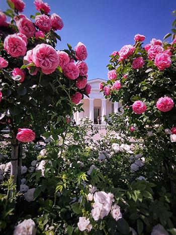 volksgarten, rosen, blüte, juni, fotospots wien, locations, shooting, tempel, romantisch,
